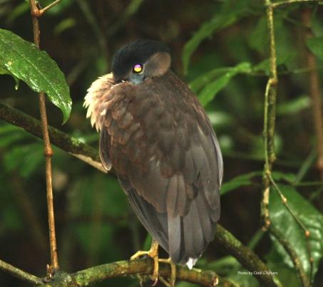 Bird BoatBilled Heron 3564 expSign