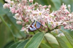 Butterfly Blue Flowers 5016 CrpSatSM