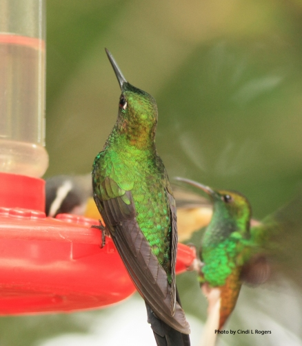 Hummingbird 3317 crpSign