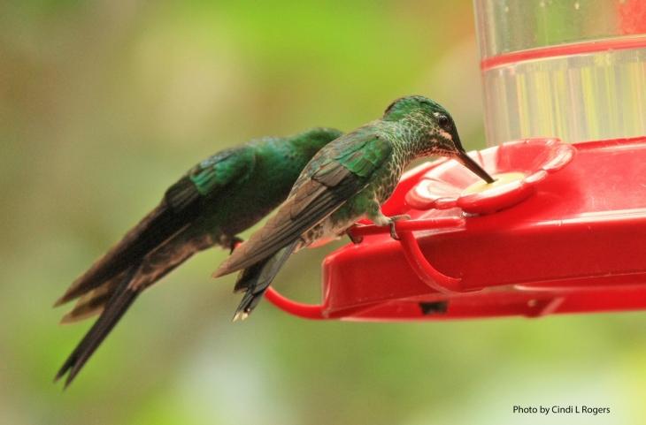 Hummingbird 3357 crpltSign