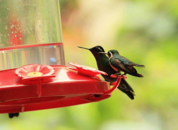 Hummingbird 3367 crp