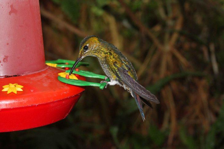 Hummingbird at La Paz