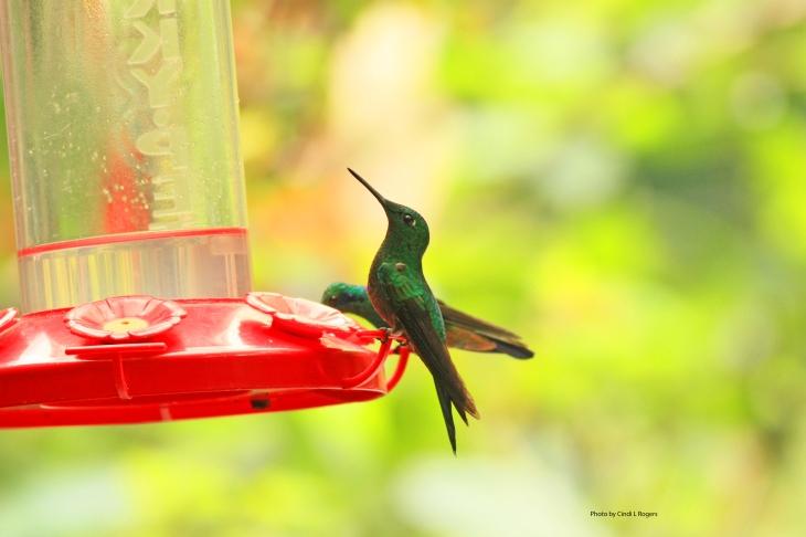 Hummingbird_3342 crpltSign