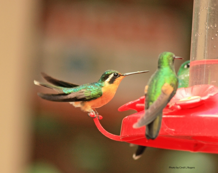 Hummingbird_3458 crpltSign