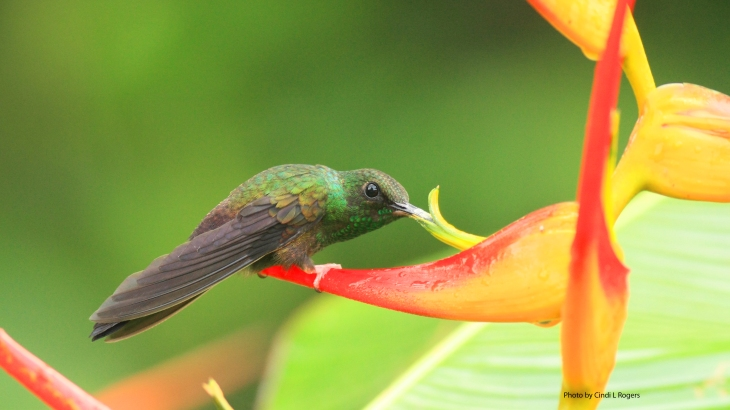 Hummingbird_3624 crpsatSign