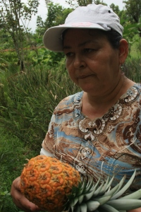 Costa Rica women growing pineapple