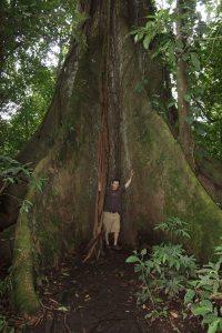 Super huge tree!