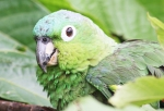 Parrot at Cataratas Cabins in La Fortuna